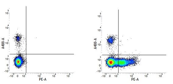 CD26 Antibody | M-A261 gallery image 2