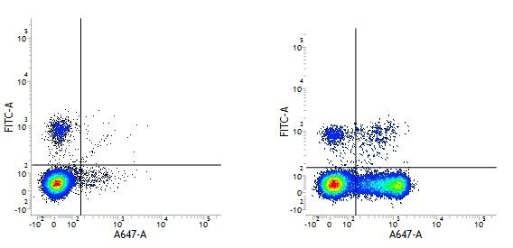 CD27 Antibody | LT27 gallery image 1