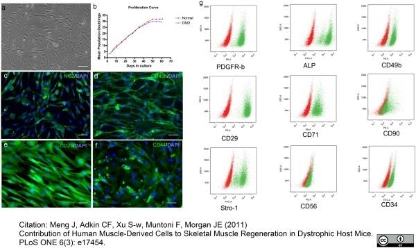 CD29 Antibody | 4B7R gallery image 8