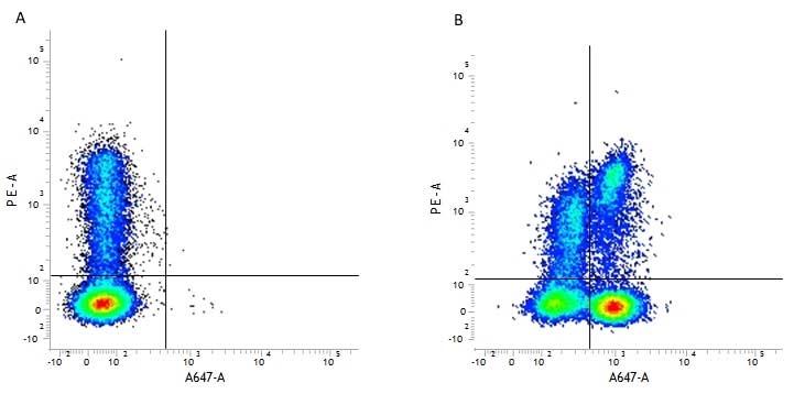 CD3 Antibody | CD3-12 gallery image 1