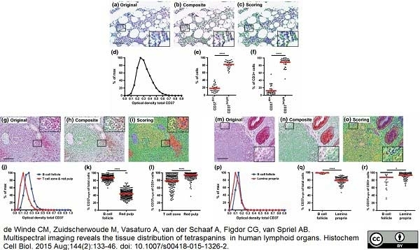 CD3 Antibody | CD3-12 gallery image 9