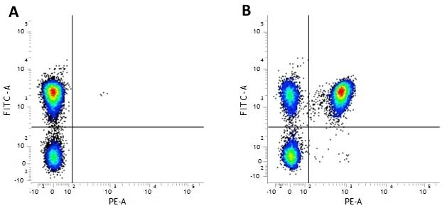CD3 Antibody   MEM-57 gallery image 1