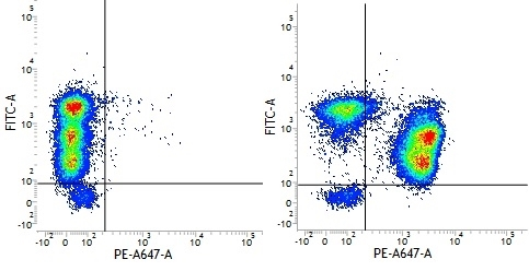 CD3 Antibody | UCHT1 gallery image 18