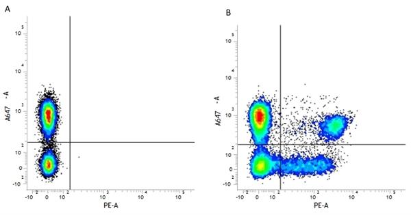 CD3 Antibody | UCHT1 gallery image 6