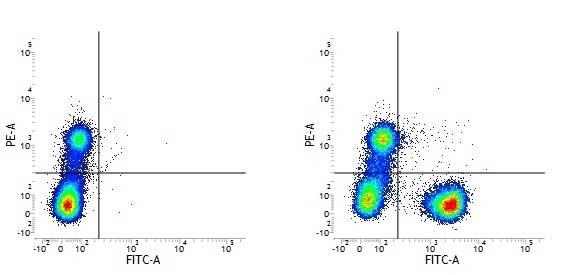 CD3 Antibody | UCHT1 gallery image 17