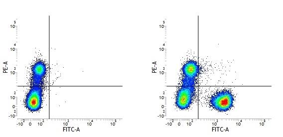 CD3 Antibody | UCHT1 gallery image 9