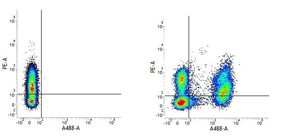CD3 Antibody | UCHT1 thumbnail image 13