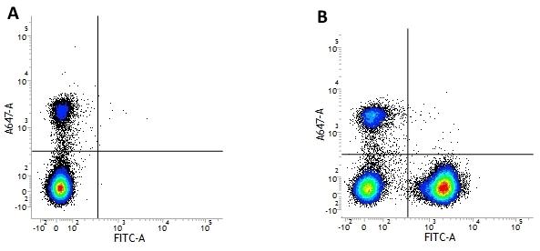 CD3 Antibody | UCHT1 gallery image 16