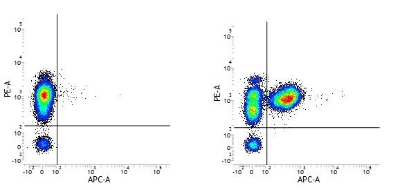 CD3 Antibody | UCHT1 gallery image 12