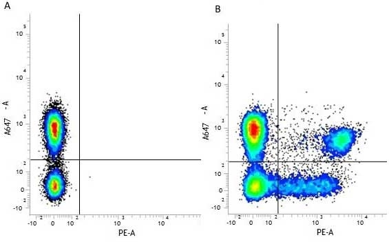 CD3 Antibody | UCHT1 gallery image 13