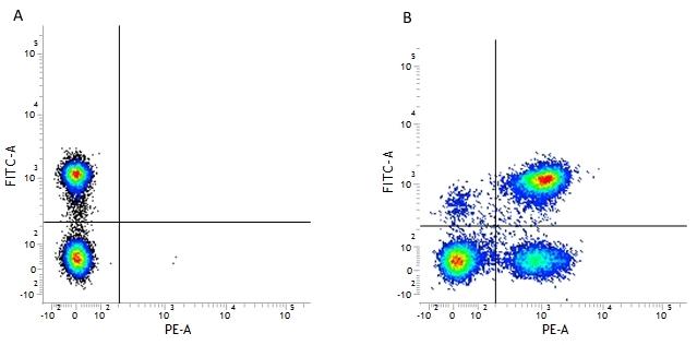 CD3 Antibody | UCHT1 thumbnail image 2