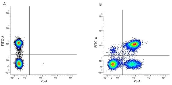 CD3 Antibody | UCHT1 gallery image 2