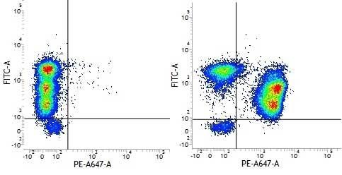 CD3 Antibody | UCHT1 gallery image 14