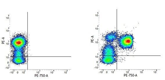 CD3 Antibody | UCHT1 gallery image 15