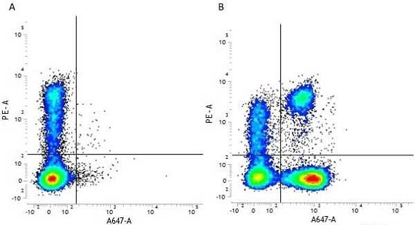 CD3 Antibody | UCHT1 gallery image 10
