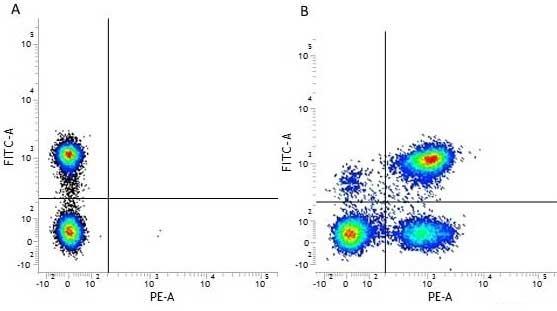 CD3 Antibody | UCHT1 gallery image 8