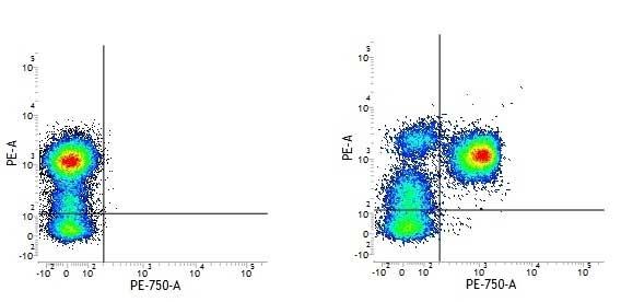 CD3 Antibody | UCHT1 gallery image 1