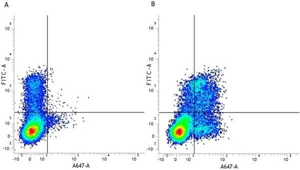 CD314 Antibody | 1D11 gallery image 6