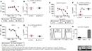 CD32 Antibody | AT10 thumbnail image 6