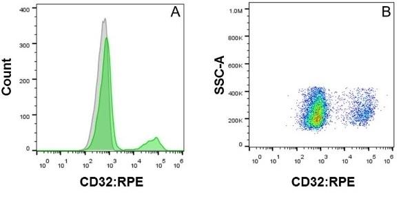 CD32 Antibody | AT10 gallery image 7
