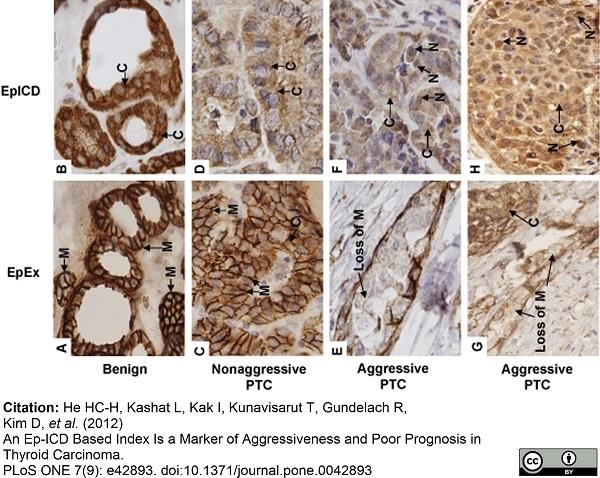 CD326 Antibody | MOC-31 gallery image 9