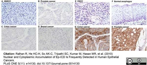 CD326 Antibody | MOC-31 gallery image 6
