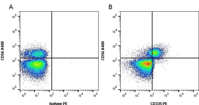 CD335 Antibody   9E2 gallery image 1