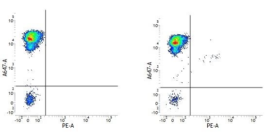 CD34 Antibody   QBEND/10 thumbnail image 4
