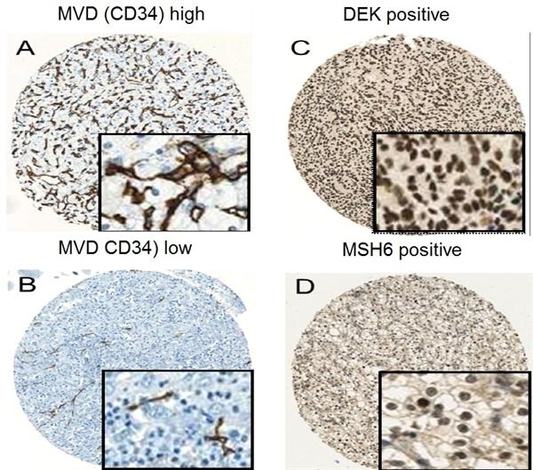 CD34 Antibody | QBEND/10 gallery image 3