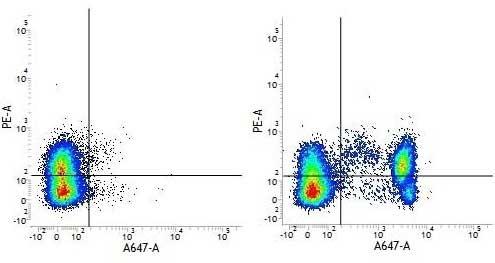 CD4 Antibody | RPA-T4 gallery image 5
