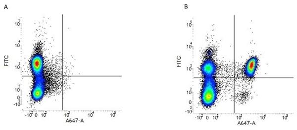 CD4 Antibody | RPA-T4 gallery image 1