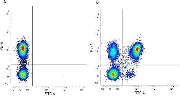 CD4 Antibody | RPA-T4 gallery image 3
