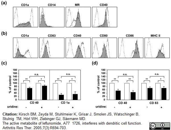 CD40 Antibody | LOB7/6 gallery image 9