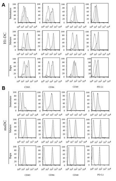 CD40 Antibody | LOB7/6 gallery image 6