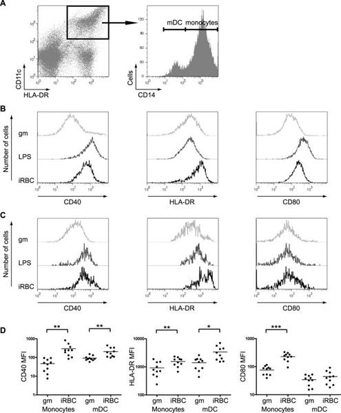 CD40 Antibody | LOB7/6 gallery image 5