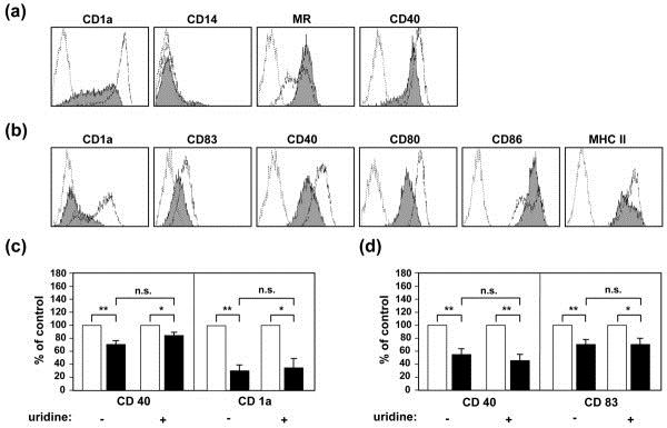 CD40 Antibody | LOB7/6 gallery image 8