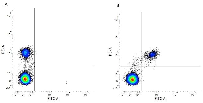 CD40 Antibody | LOB7/6 thumbnail image 11
