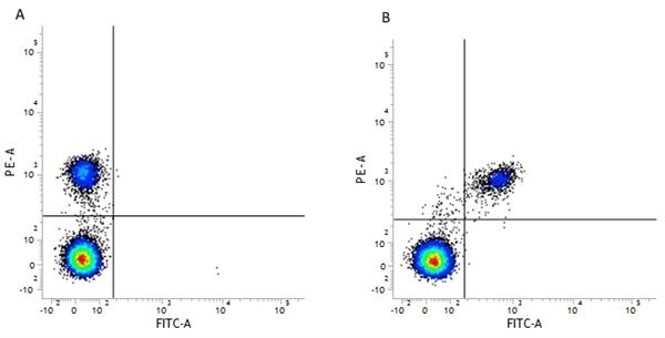 CD40 Antibody | LOB7/6 gallery image 11