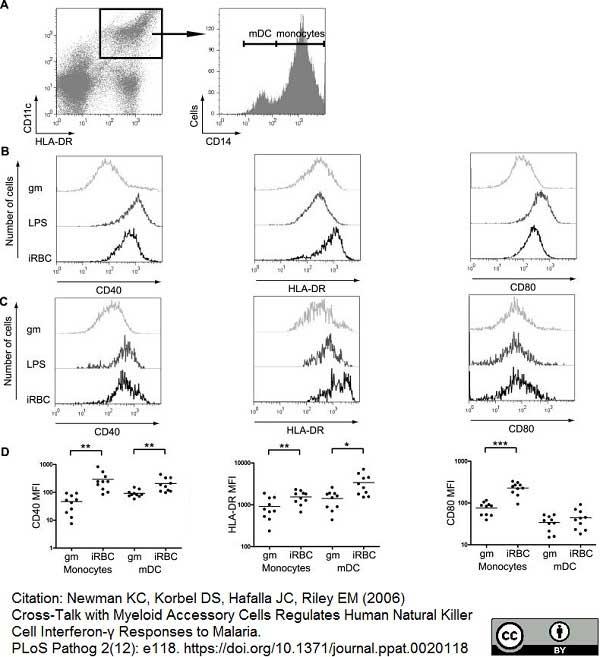 CD40 Antibody | LOB7/6 gallery image 7