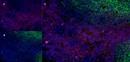 CD43 Antibody   DFT-1 thumbnail image 11