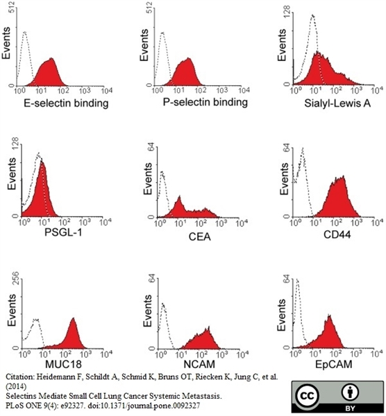 CD44 Antibody | 156-3C11 gallery image 2