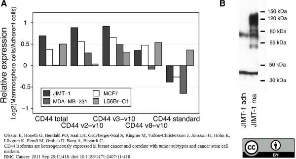 CD44 Antibody | 156-3C11 gallery image 5