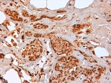 CD44 Antibody | F10-44-2 gallery image 7