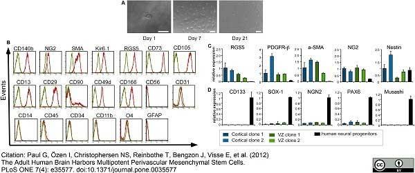 CD45 Antibody | F10-89-4 gallery image 5