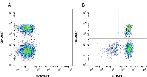 CD45 Antibody | YTH24.5 gallery image 1
