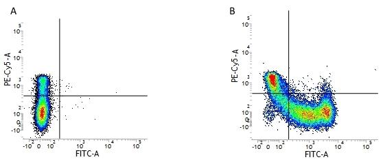 CD45RA Antibody | F8-11-13 gallery image 1