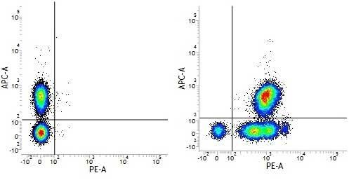 CD46 Antibody | MEM-258 gallery image 1