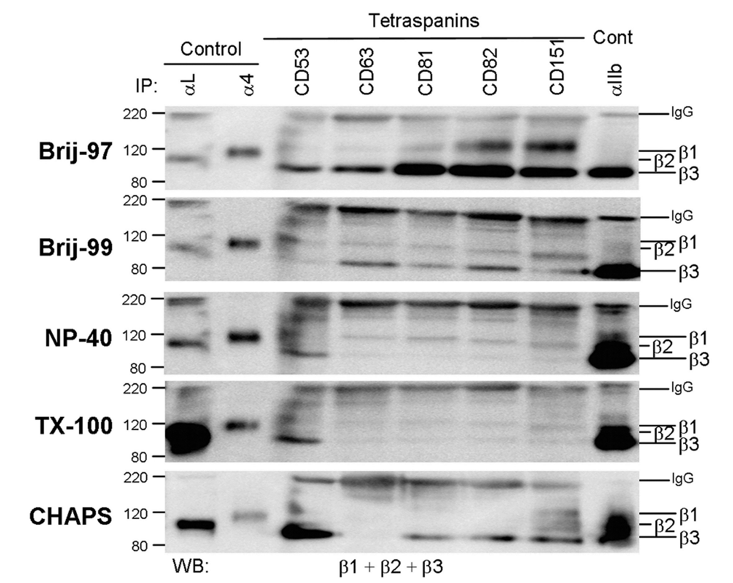 CD49d Antibody | HP2/1 gallery image 3