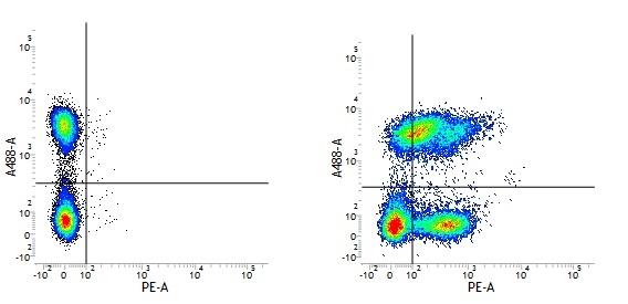 CD49f Antibody | NKI-GoH3 thumbnail image 3
