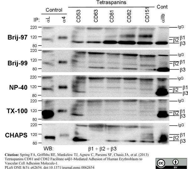 CD53 Antibody | MEM-53 gallery image 7